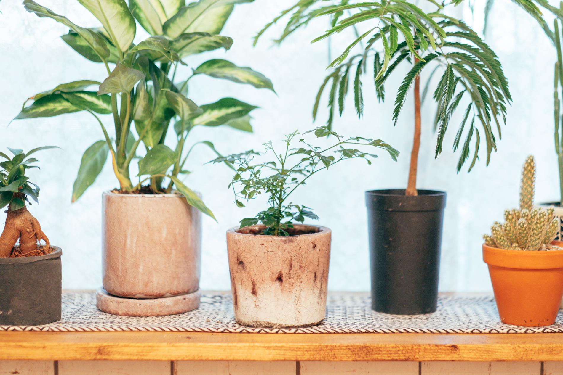 植物だけでなく、鉢植えも様々な種類がありました。今のお部屋のきっかけはこの鉢植えだったそう。 「実は鉢植えの方に先にハマって、好きで集めていたんですが植物がなくて悲しくなってしまって、最近になって一気に増やしてきました。」