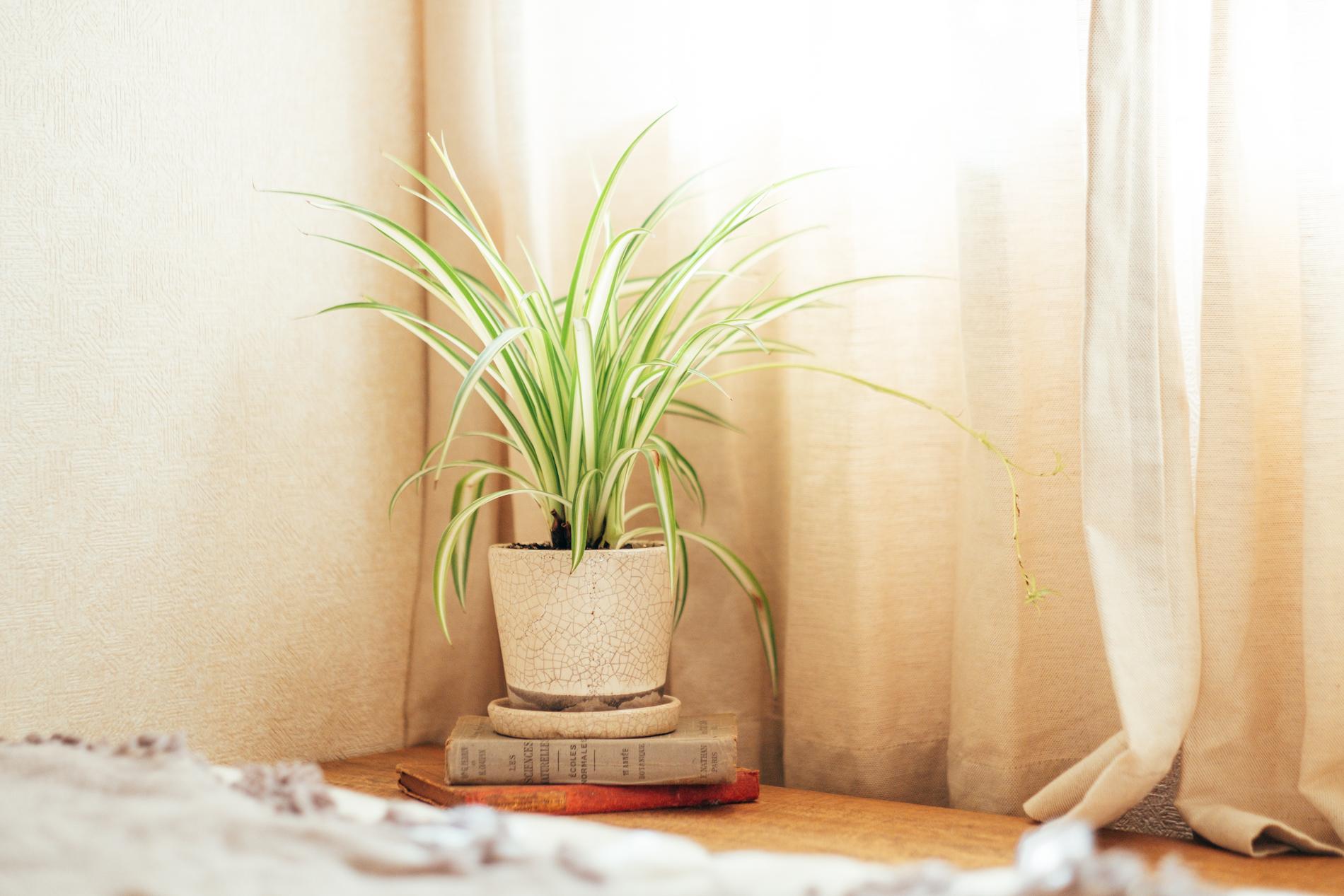 リビングのみならず、寝室など他のお部屋にも最近は植物を置き始められたそう。