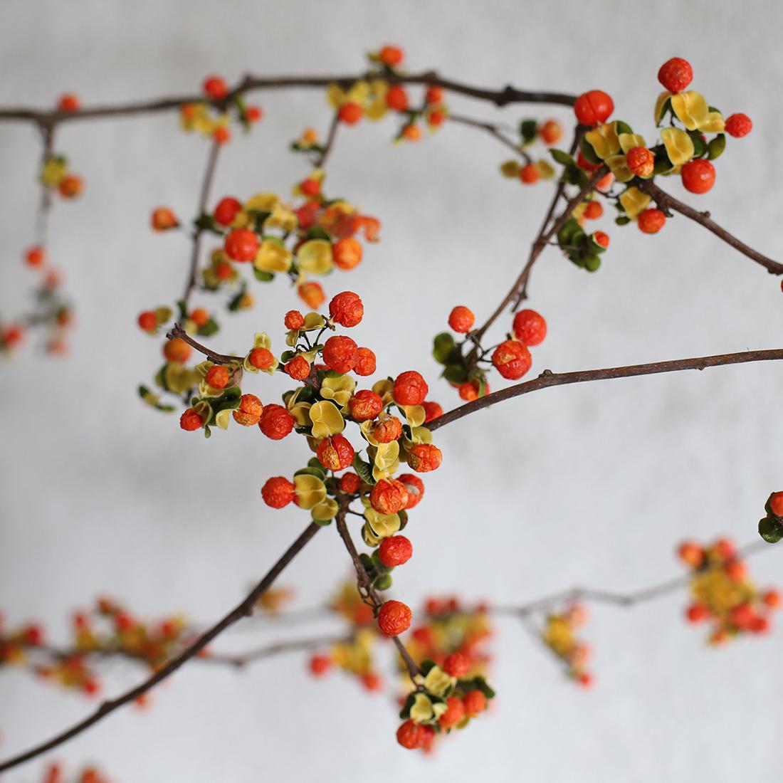 黄色の殻と、オレンジ色の丸い果実が特徴。和風なお部屋はもちろんのこと、あえて和食器のような花器に入れることで、洋室でもしっくりと飾ることができるでしょう。