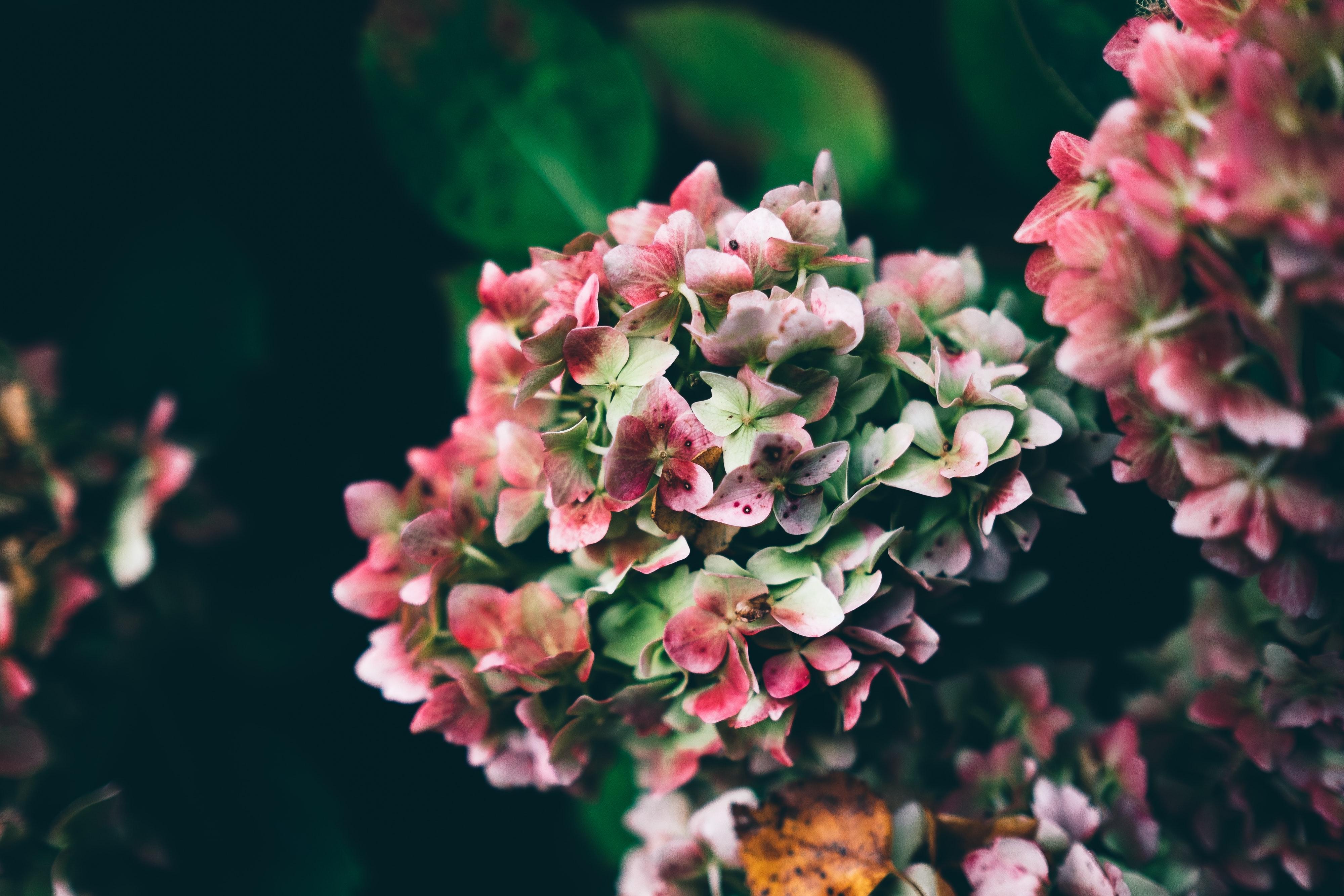 秋らしい花で部屋を彩ろう。今だから楽しめるおすすめのお花9種