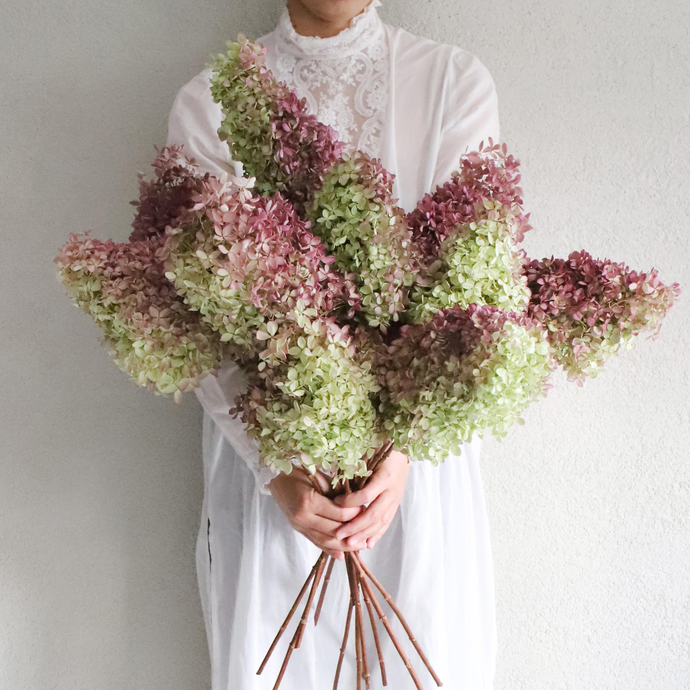 花の水分が少なくなってきた秋頃の紫陽花は、ドライフラワーにもなりやすいのでおすすめ。夏ころとはまた違う、紫陽花の楽しみ方ができそうです。