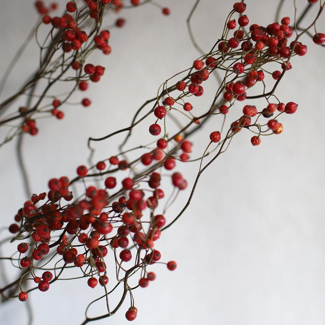 ルビー色のきれいな実で、豪快な枝ぶりが魅力的な植物です。国によっては、ハーブティーやローズヒップオイルの原料にも使われています。