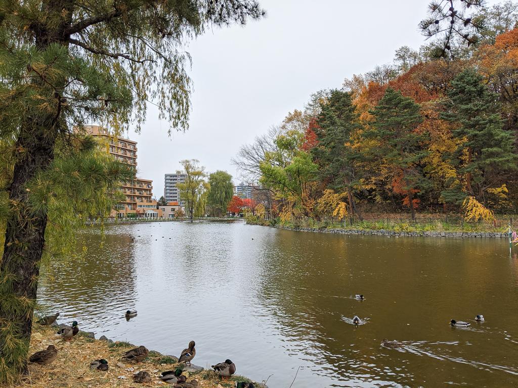 公園内にはボート池があり、5月から10月にかけてボートを借りて池を散策することもできますよ。