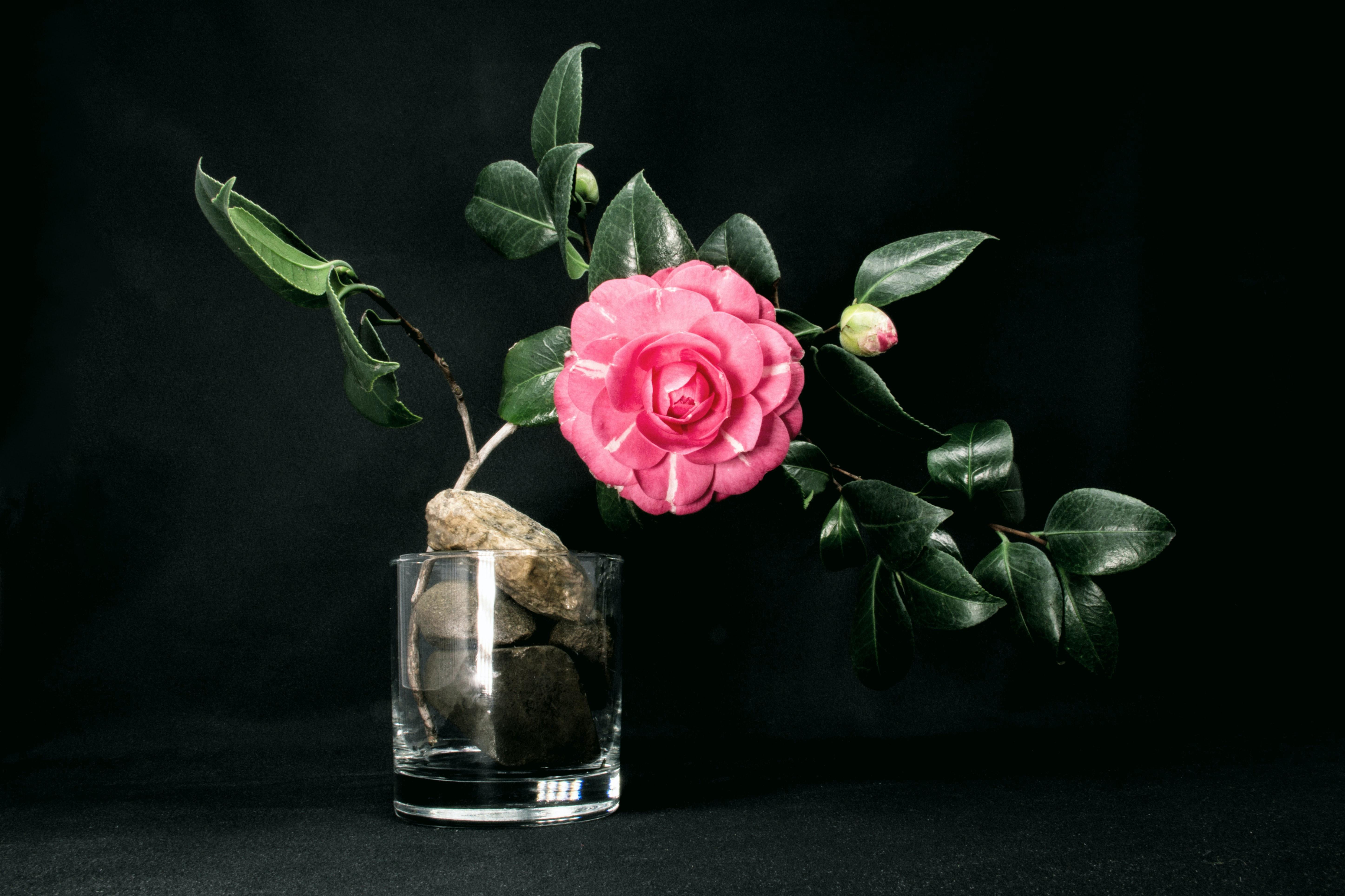 花弁は繊細で傷つきやすく、咲いた後は花首ごとぽとりと落ちるため、できるだけ人の手が触れにくい場所に飾るのが良いでしょう。