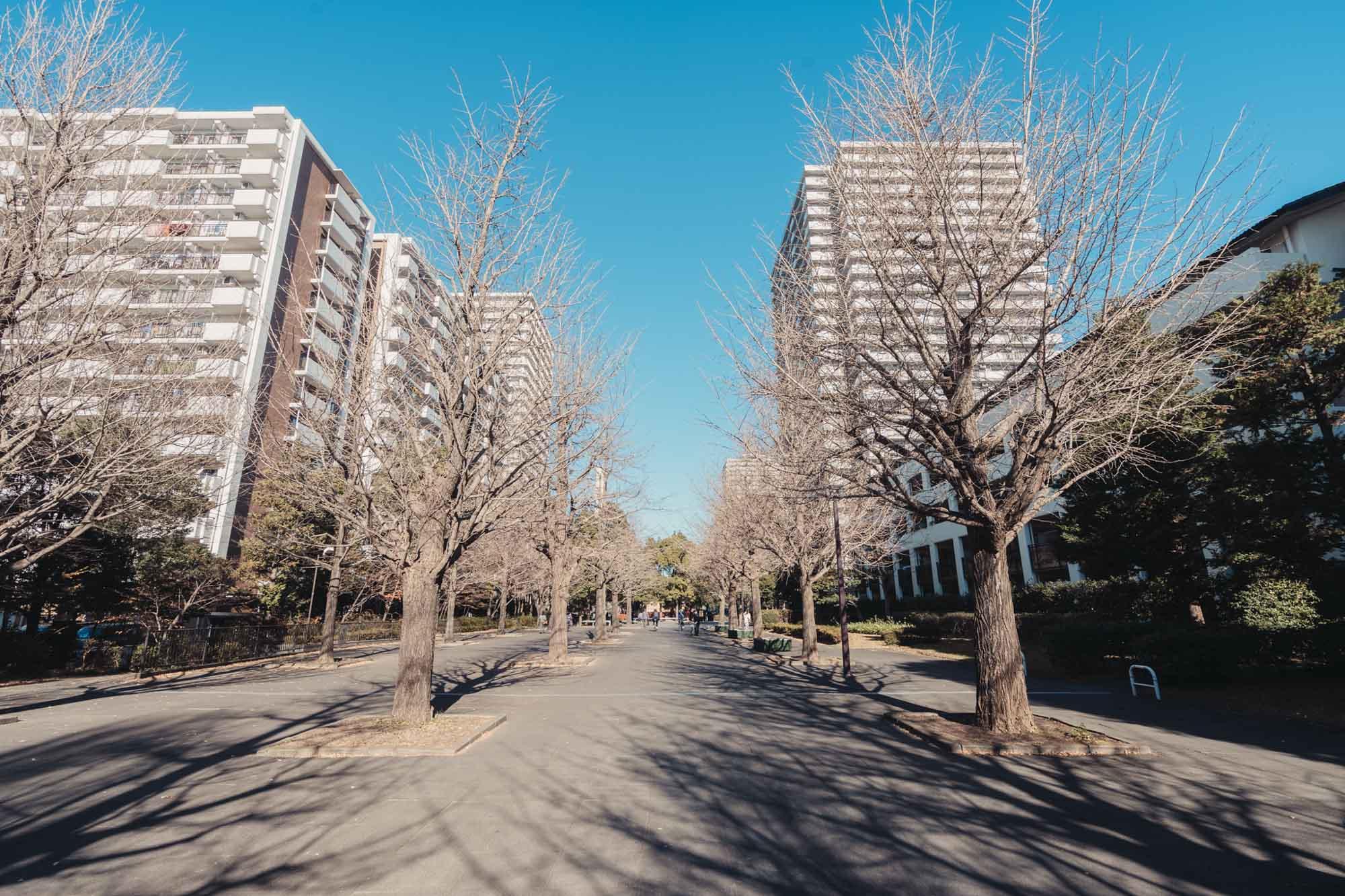 名前の通り、立派なイチョウの木が並び立つ大きな遊歩道に隣接しています。ここをまっすぐ進めばすぐ駅へ。