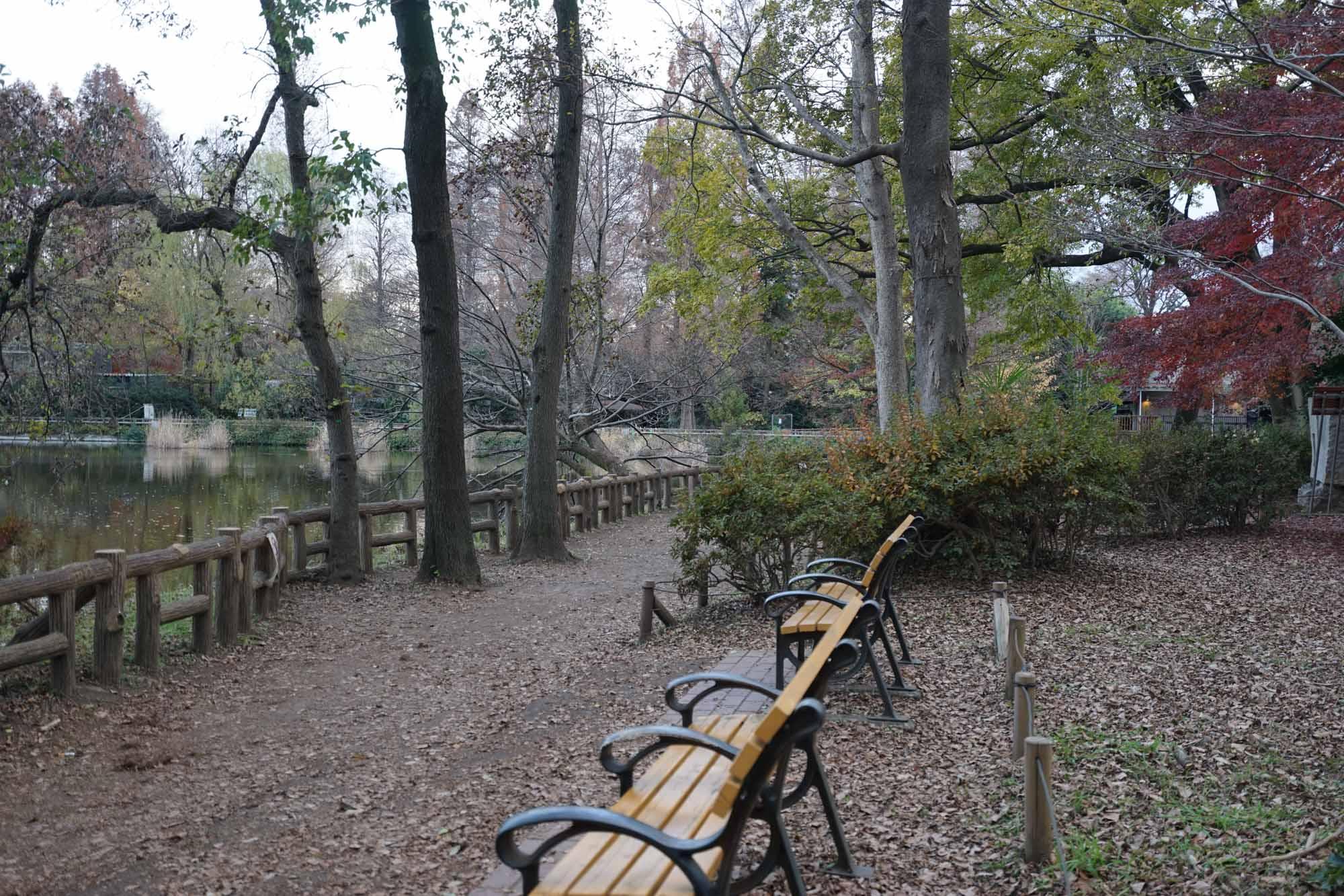 敷地は広大で、遊歩道やベンチも綺麗に整備されているので、リモートワークの息抜きにちょっと訪れるのにとても良いです。