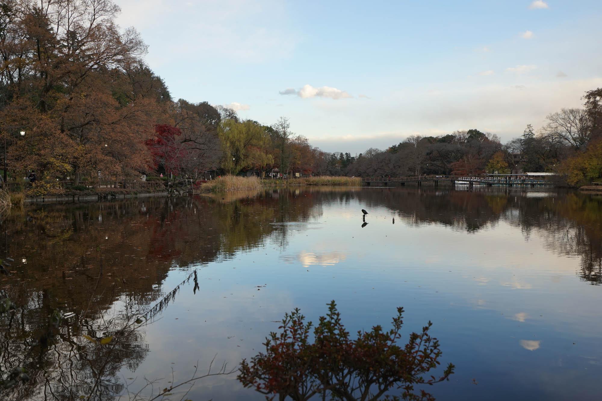 大きな池を中心にした、言わずと知れた都民の憩いのオアシスですね。