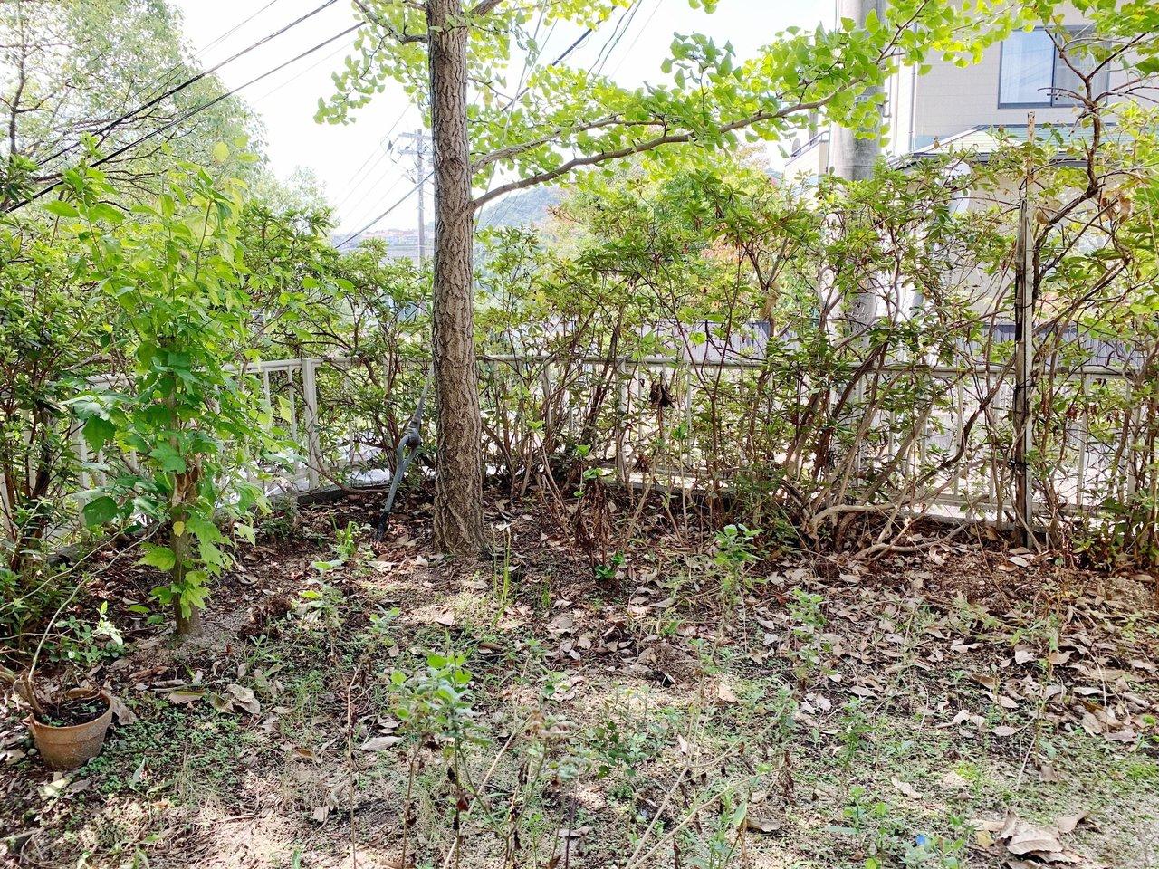 一軒家の特権、ちょっとしたお庭つき!