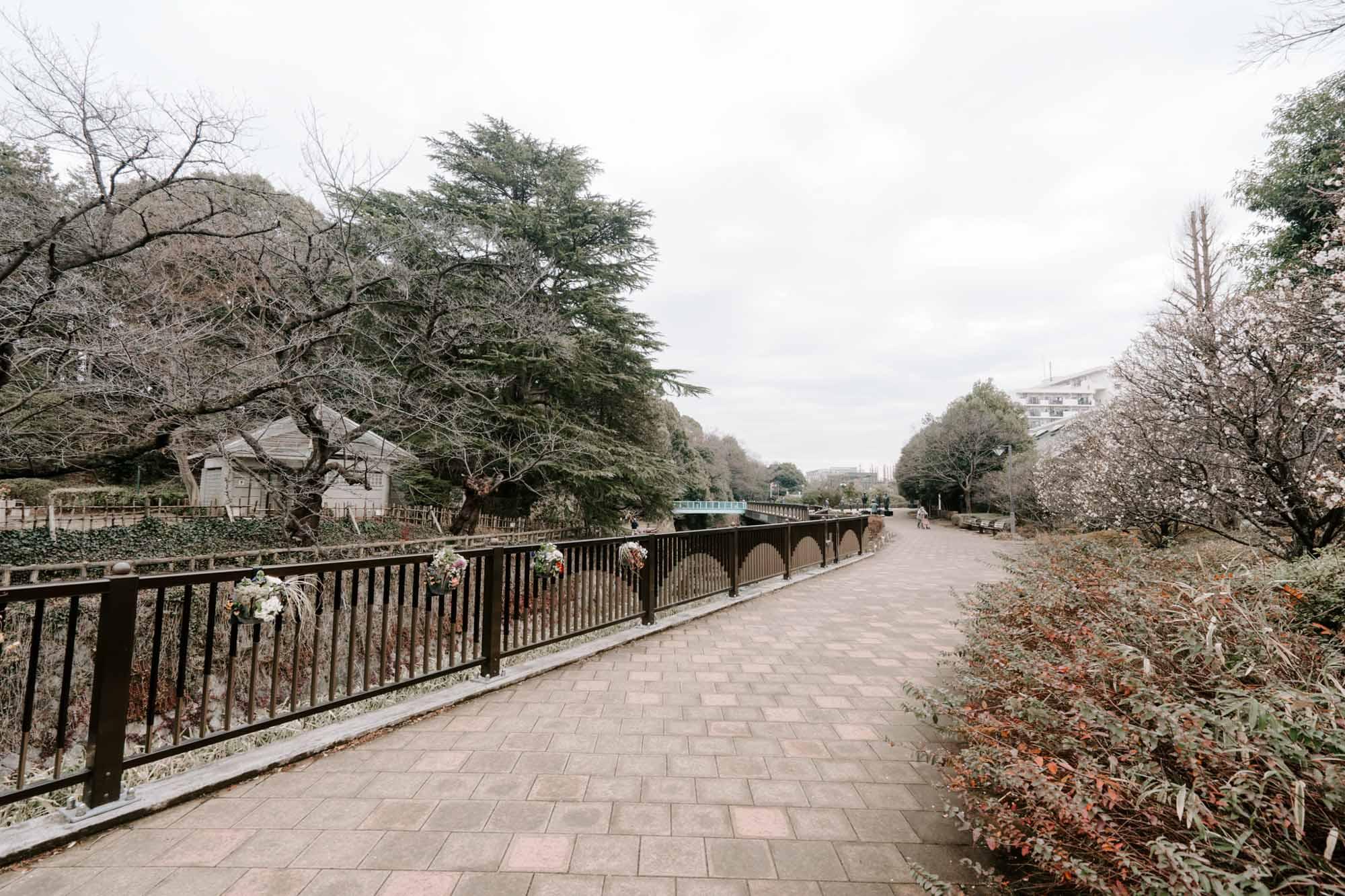 妙正寺川沿いにはお散歩やランニングにも良さそうな遊歩道が整備されています。