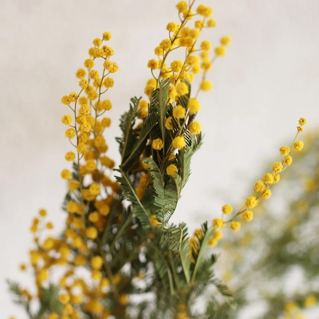 お花の色はオレンジ色に近く、香りが高いことで知られています。ヨーロッパでは香水の原料とされることもあるんだとか。