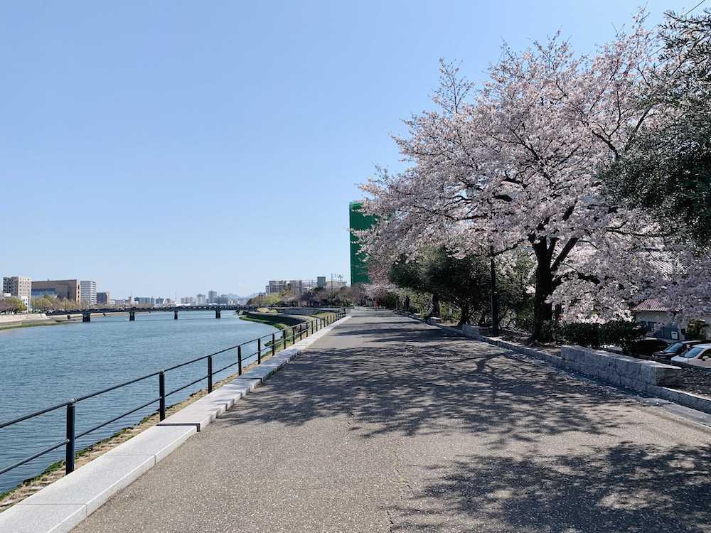 商店街と桜並木のある街。広島・鷹野橋駅周辺エリアに住もう