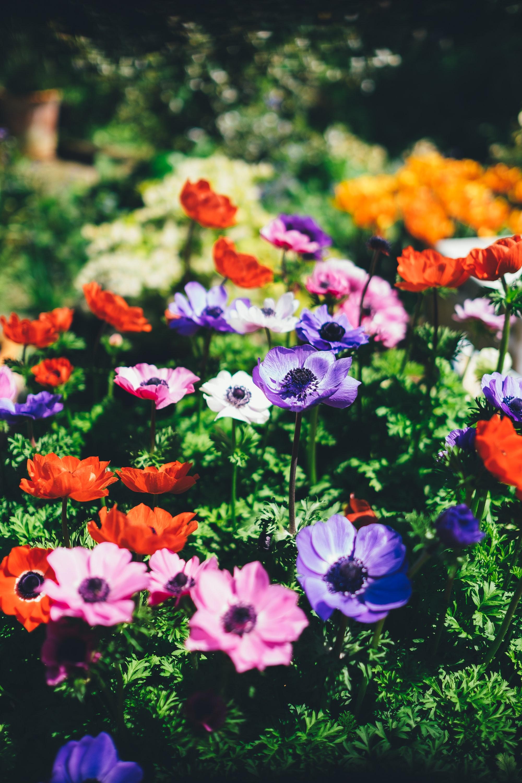 花がパッと開いた姿は存在感があるので、食事の時間もより一層楽しいものになるはず。色は赤、ピンク、紫、白など多様です。お部屋の雰囲気に合わせて選ぶ楽しみもありますね。