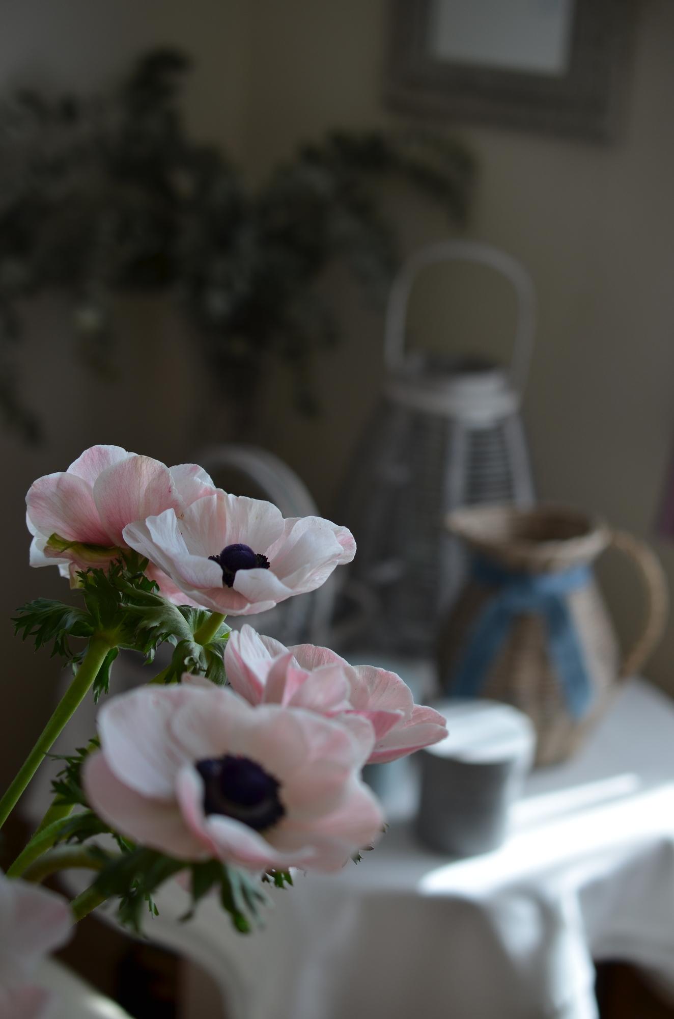 ダイニングテーブルなどの、限られたスペースや空間を華やかに彩りたい時には、色鮮やかな花びらが特徴的な、アネモネがおすすめ。