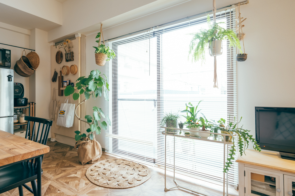 差し色として使われているのが窓際を中心にしたグリーンの数々。 「お部屋を作っていく中で数が増えて行きました。まだまだ数は増やして行きたいです。」