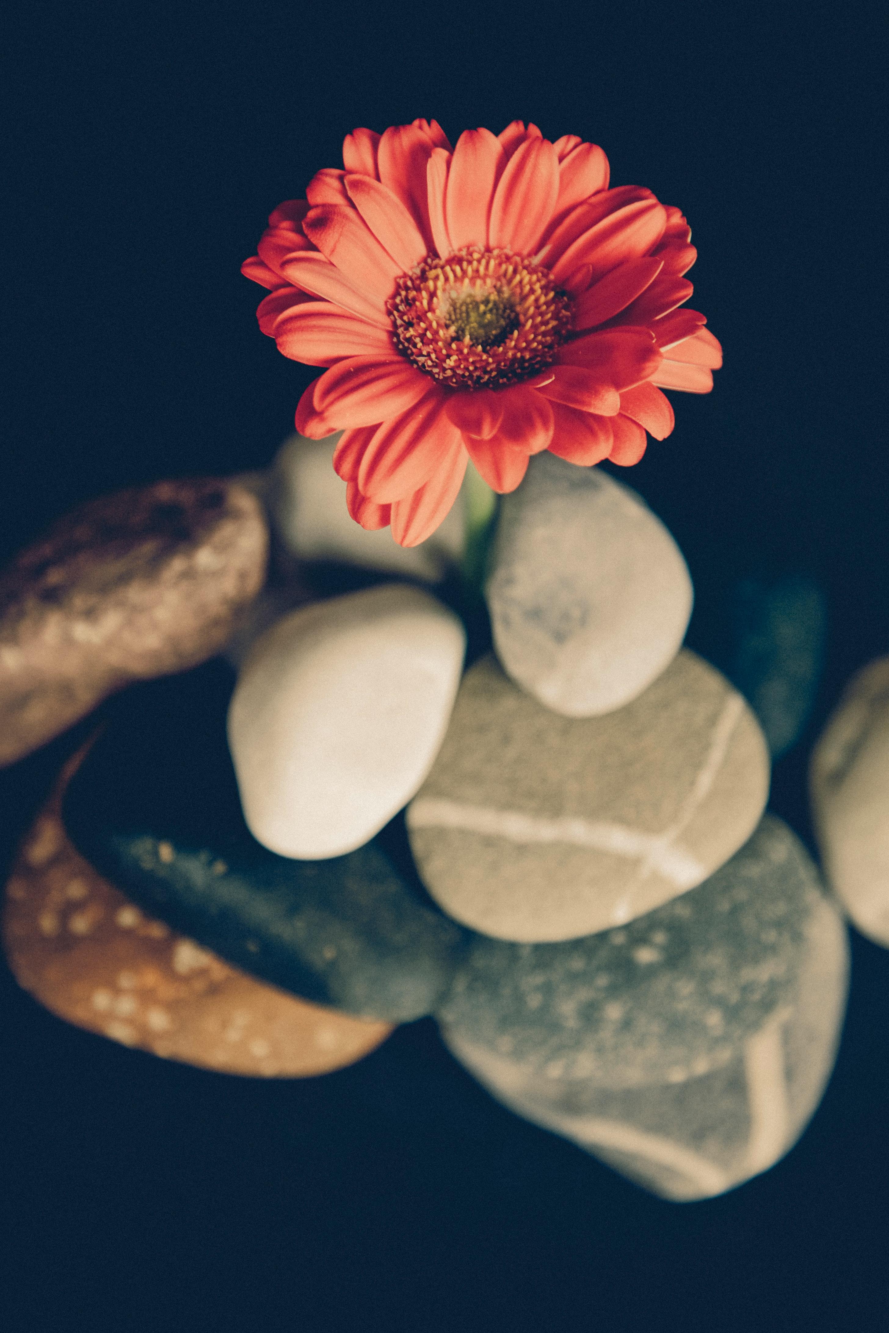 くっきりとした色や形が特徴で、明るく、陽気な雰囲気がプレゼントにもぴったり。種類が豊富で、いろいろな花姿のものがあるので、お母さんのイメージに合わせて選んでみてはいかがでしょう。