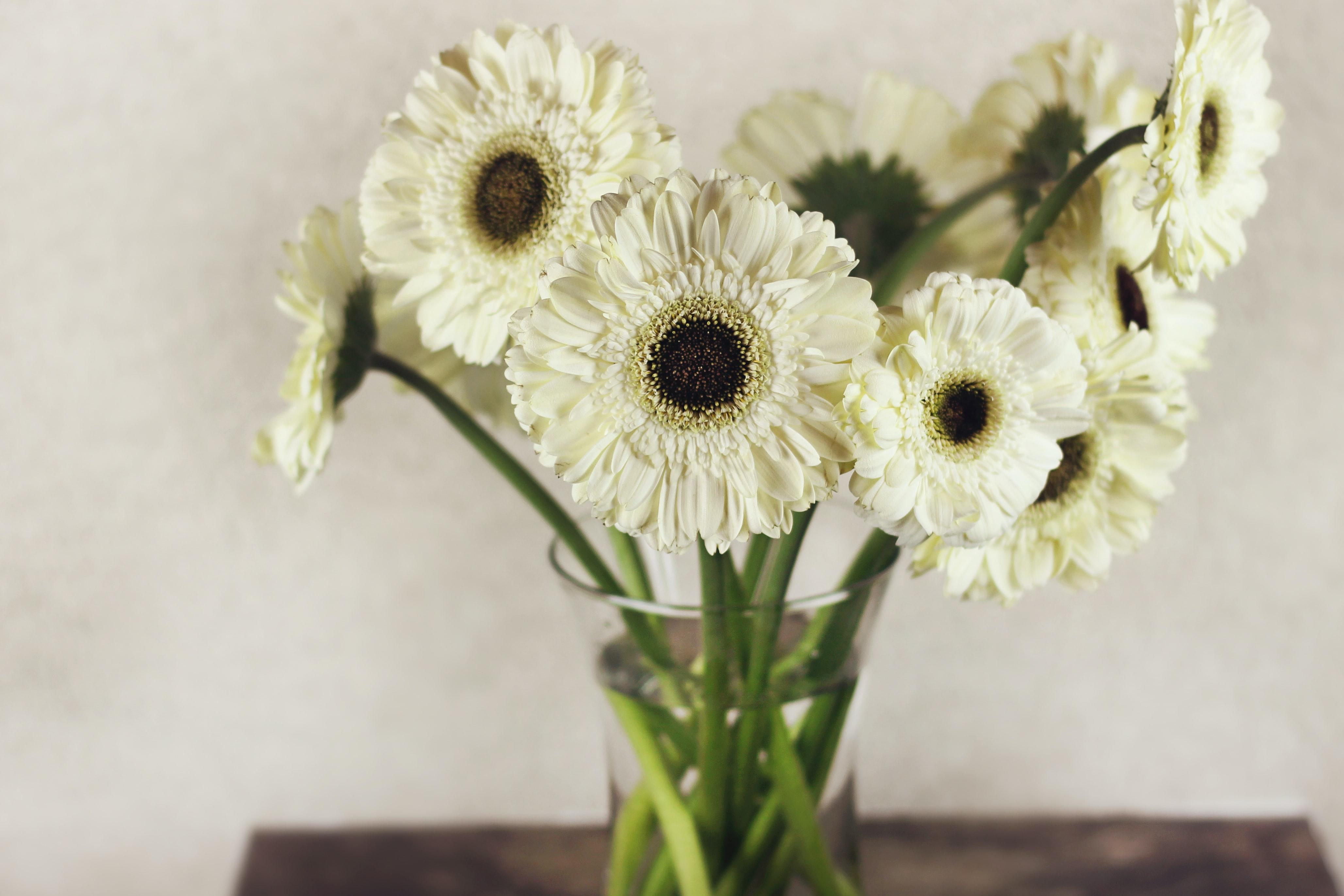 通年で出回っていて人気なお花でもあるため、花屋さんの取り扱いも多いガーベラ。開花期は春~夏前と夏の終わり~秋前。ちょうど今頃が旬なお花です。