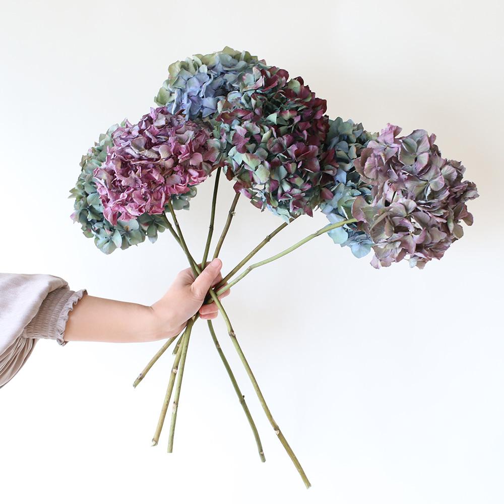 小さな花びらの萼(ガク)が寄り集まって咲いている姿が、家族の結びつきを連想させることから家族への贈りものとしておすすめのお花なんです。