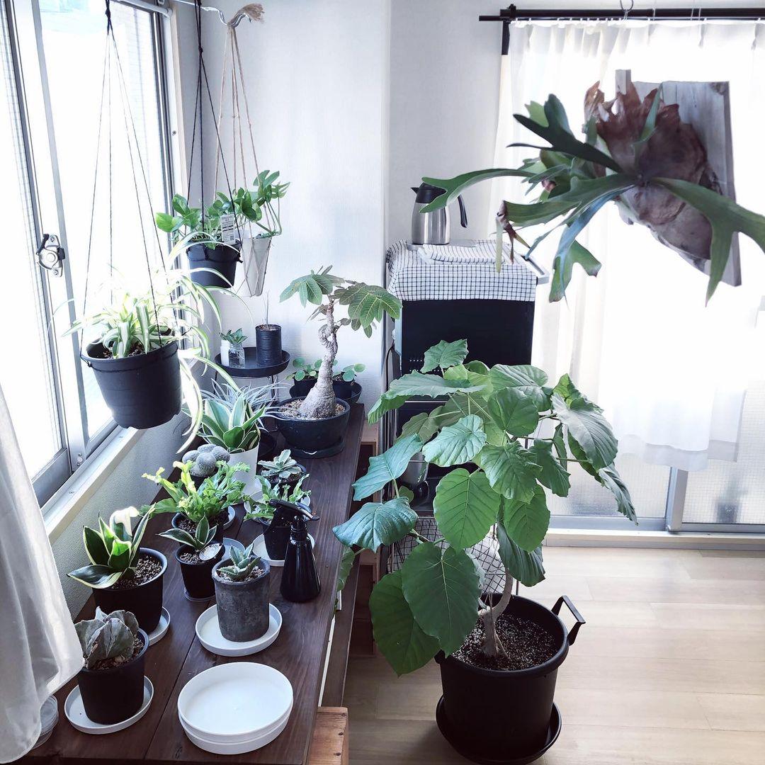 植物を置かれている棚は、やすりをかけ、オイルを塗った棚をワイン箱の上に載せたもの。
