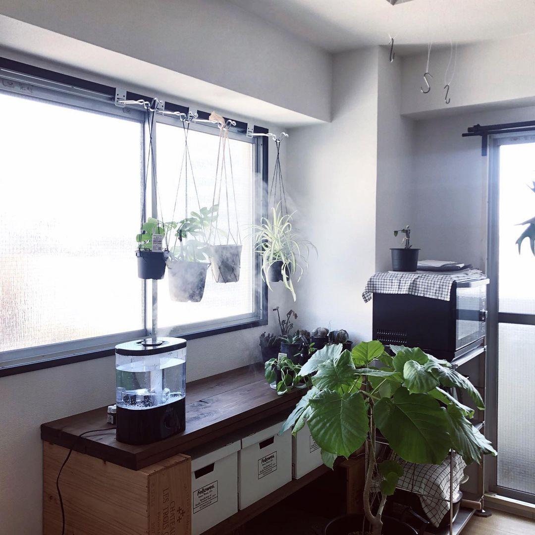 窓枠には、楽天で購入した「鴨居フック」をつけてたくさんの植物を吊り下げます。