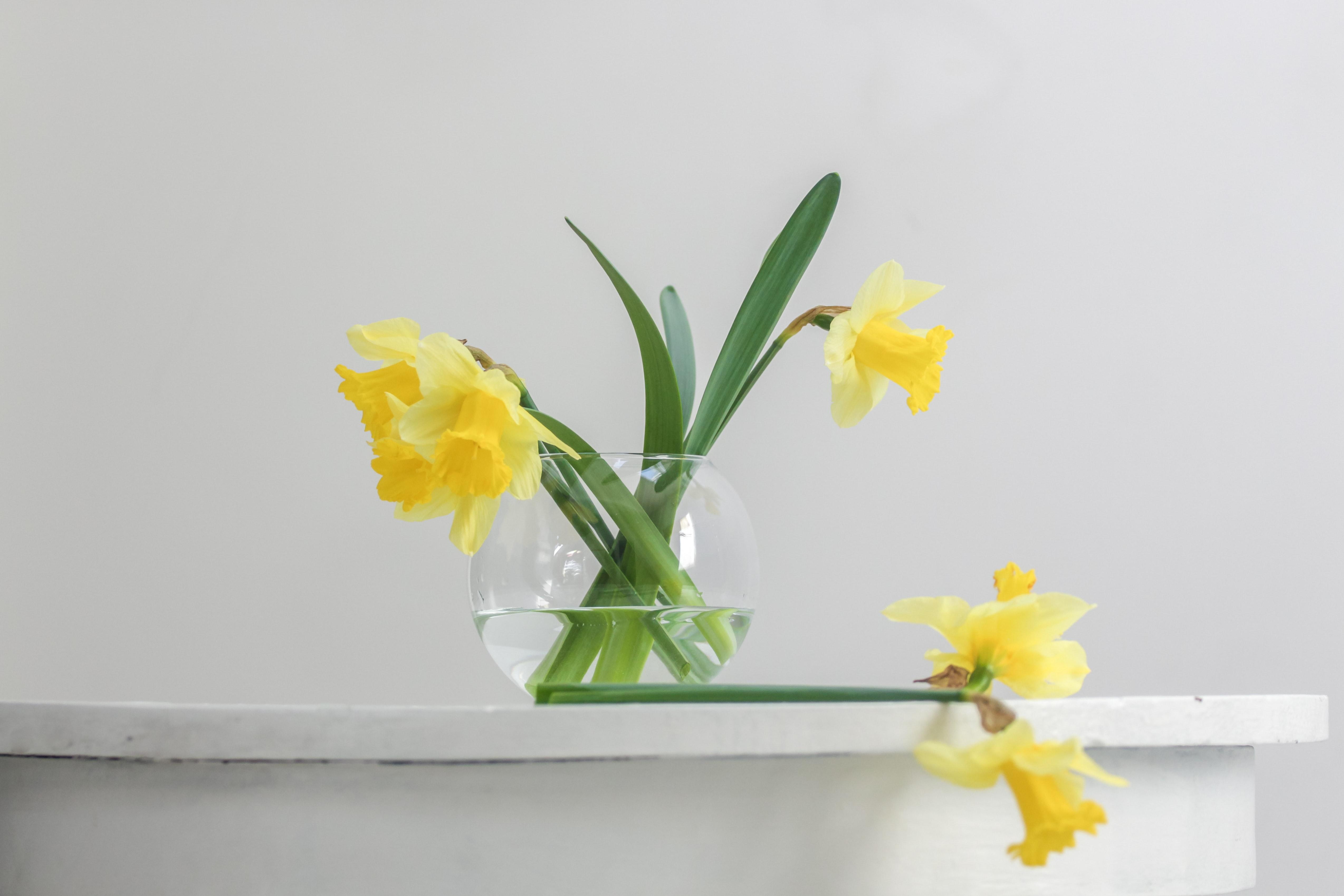 (参考記事:儚くも、美しい。1年の始まりに飾りたい、お花5選)