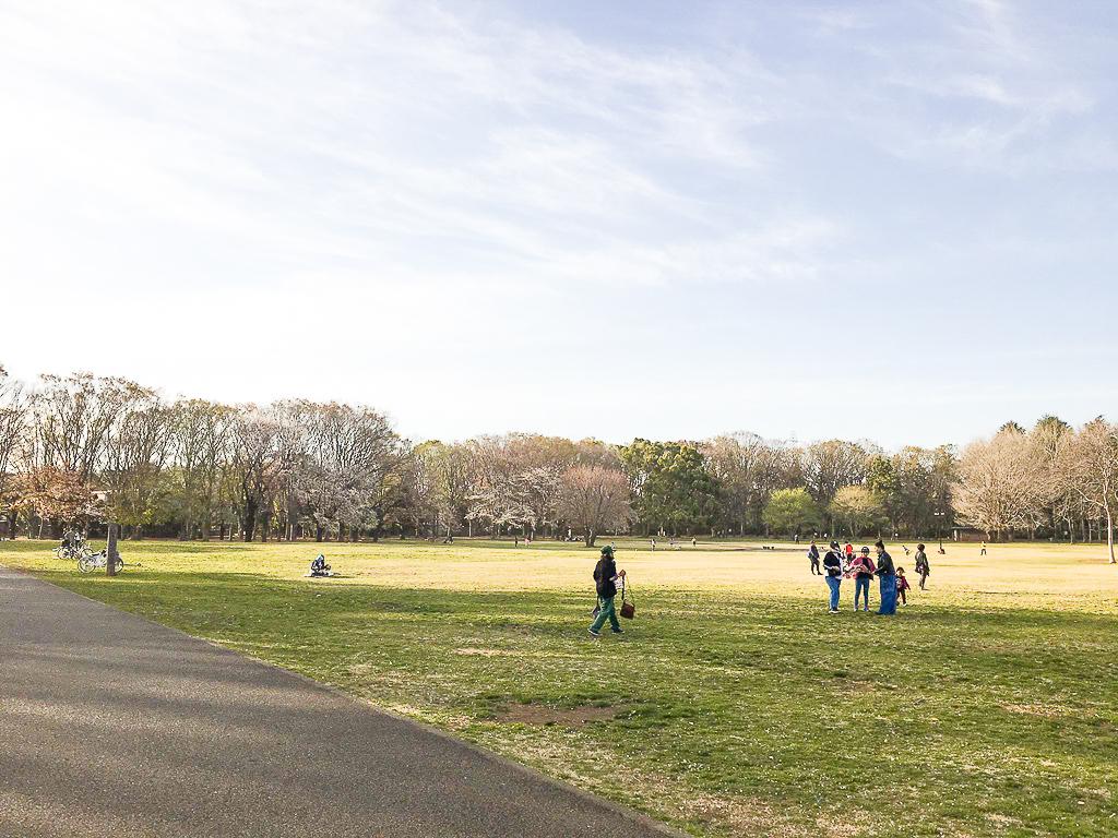 桜や雑木林を眺めながら、ピクニックもできる小金井公園。開放的で心も癒されそうです。