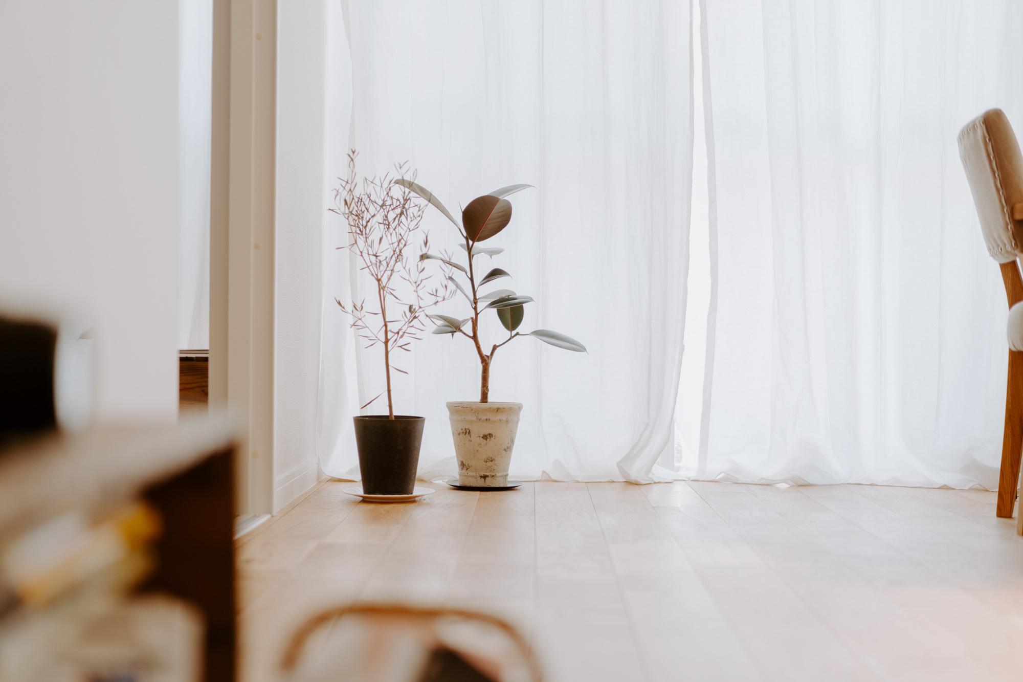 プロの意見を取り入れることも多いそう。最近、お部屋に迎えた植物は、日の当たり具合などお部屋の情報を全てお店の方に説明し、おすすめしてもらったものだそう。