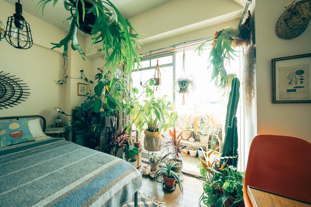 インテリアとしての植物だからこそ、ここまでのスペースを作り上げるまでには、どのように植物を増やされていったのでしょうか。 「植物は常に大きいものから考えるようにしていました。いわゆるシンボルツリーというものですね。そこから周りを固めるようにサイズも下げながら増やして行きました。」