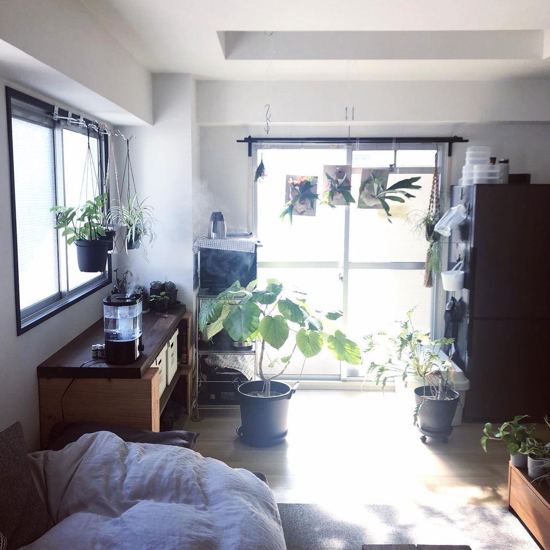 (参考記事:たくさんのグリーンと暮らす。日当たりの良いワンルームの一人暮らしインテリア)
