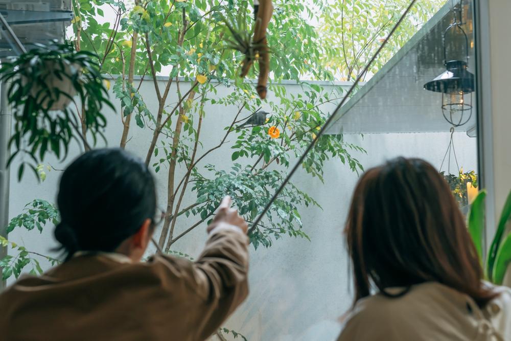 さらに中庭には植物以外の楽しみ方がありました。緑溢れる空間に惹かれて、最近は野鳥が遊びにくるように。 「東京に来る前は野鳥を撮るのが趣味で、休日はカメラを持って出かけていました。まさかの家で観察出来るような機会が出来るなんて思わなくて嬉しい誤算でしたね。」