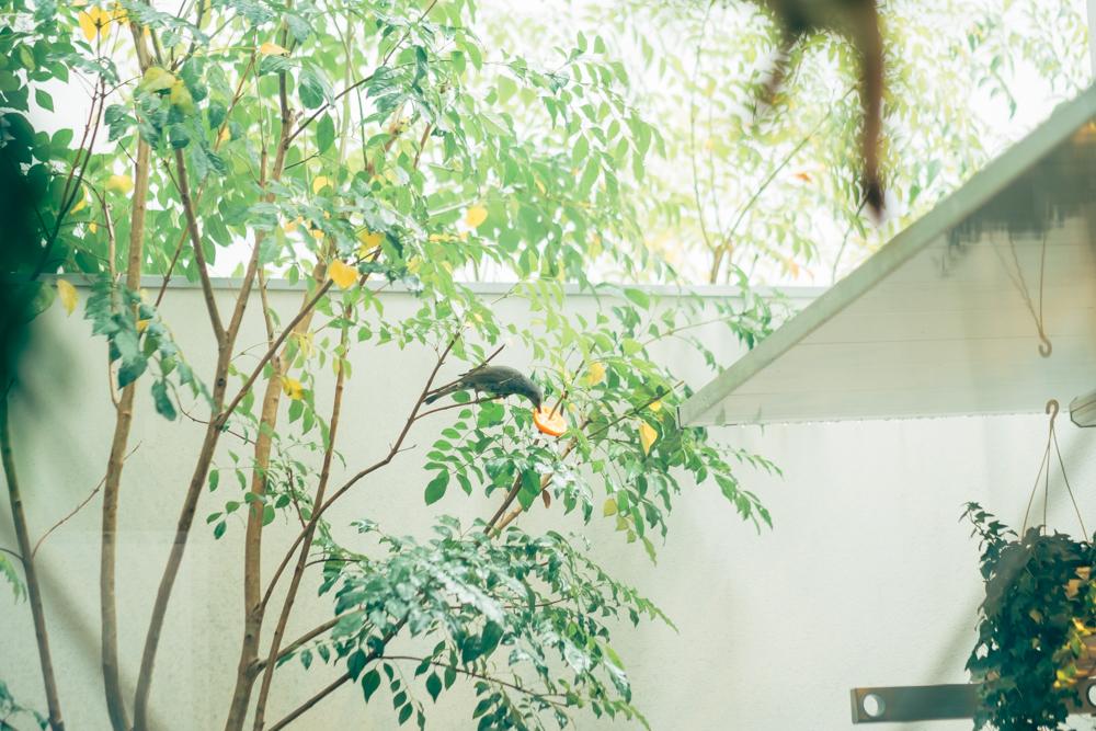 柑橘類を中庭に置くと食事の様子も見られるそう。都内にいることを忘れさせてくれる瞬間です。