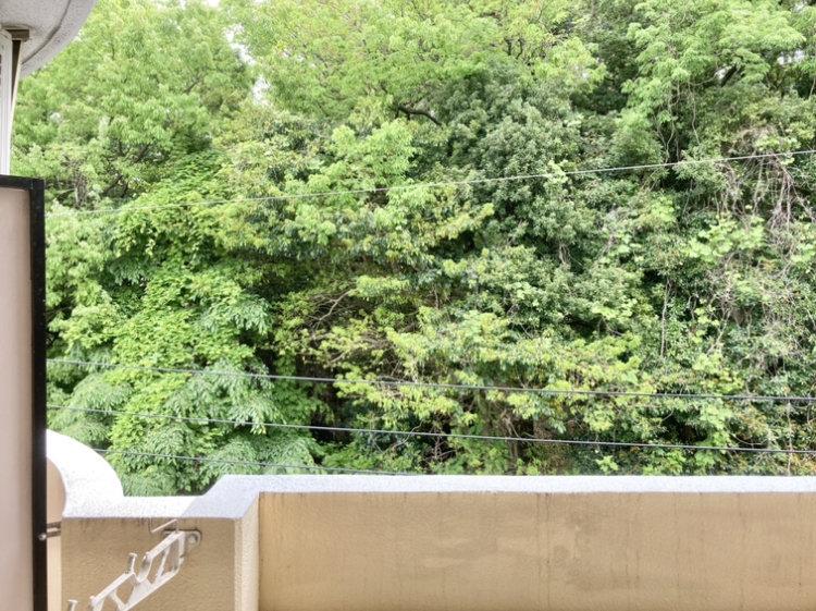 この圧巻の緑、実は市の「特別緑地保全地区」に指定された「わたなべ平和の森」。近隣住民の皆さんのボランティアにより大切に大切に維持・管理された緑地です。