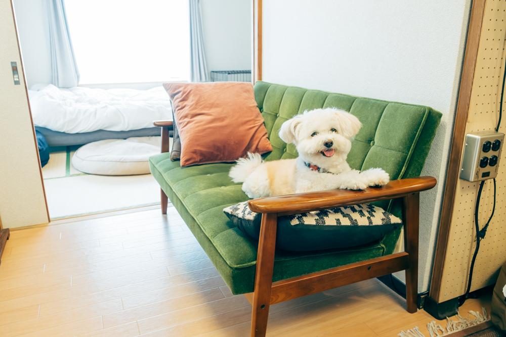 「レトロなモケットグリーンがお気に入りで、犬の特等席でもあります。」