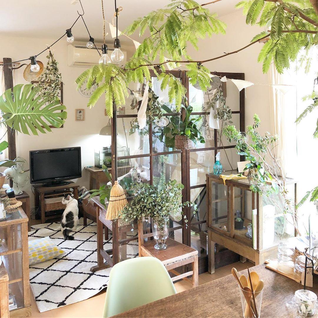 観葉植物やグリーン、ドライフラワーなどとにかく植物が大好きな方は、猫ちゃん4匹と一緒に暮らしています。