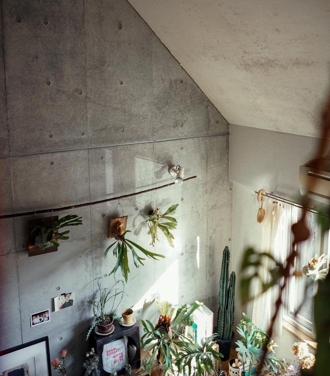 コンクリート打ちっぱなしの壁にたくさんのグリーンが映えるお部屋。
