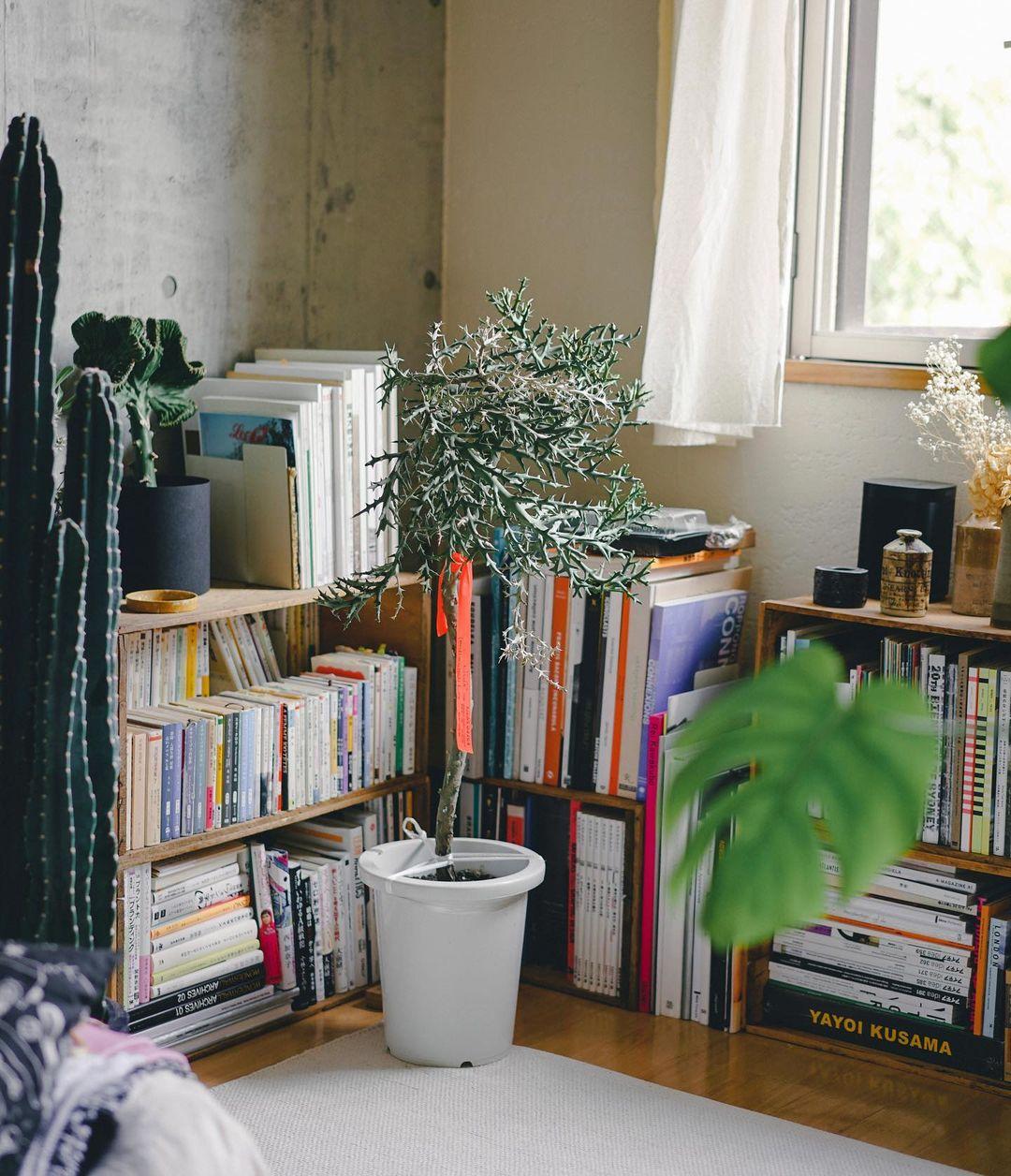 本が山ほどある、デザイナーのお部屋を拝見。ちょうどいい棚がなく、リンゴ箱をうまく組み合わせてさまざまなサイズの本や雑誌を収納するようにしています。背の低い棚にしたことで、窓からの光もよく入ってくるように。