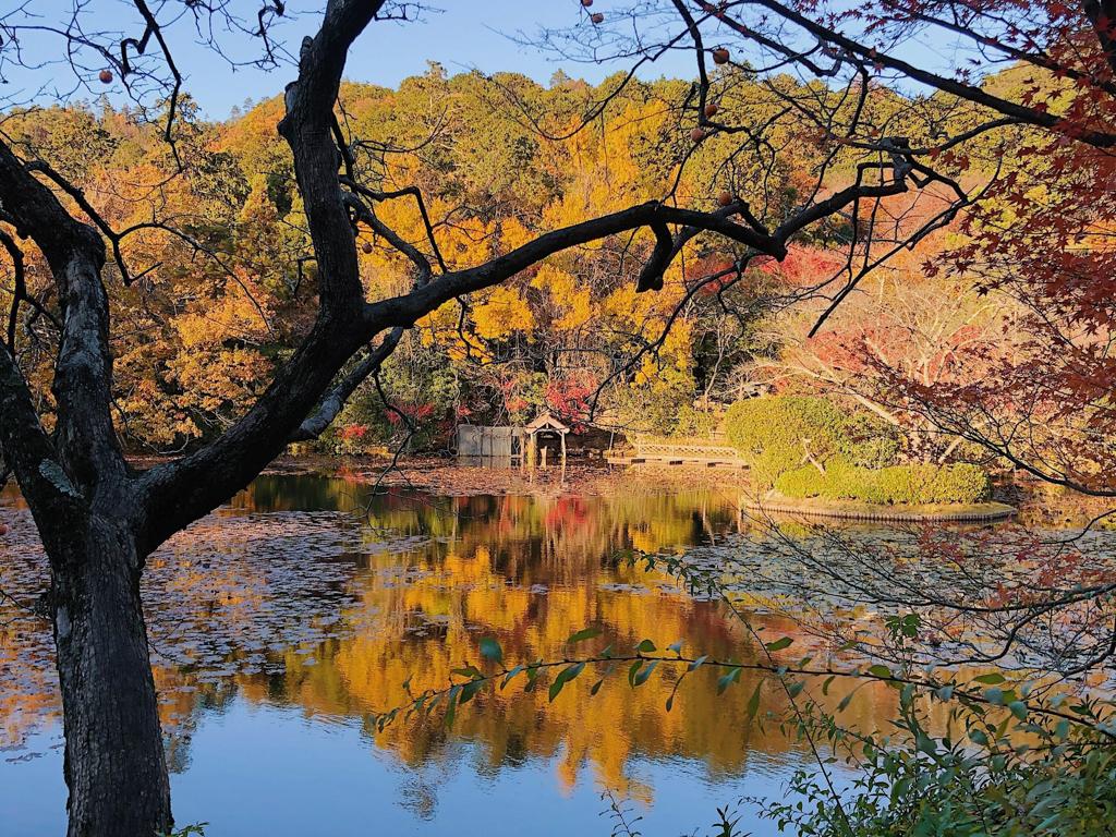 旬の紅葉を楽しむステイ。編集部厳選、京都のおすすめホテルまとめ
