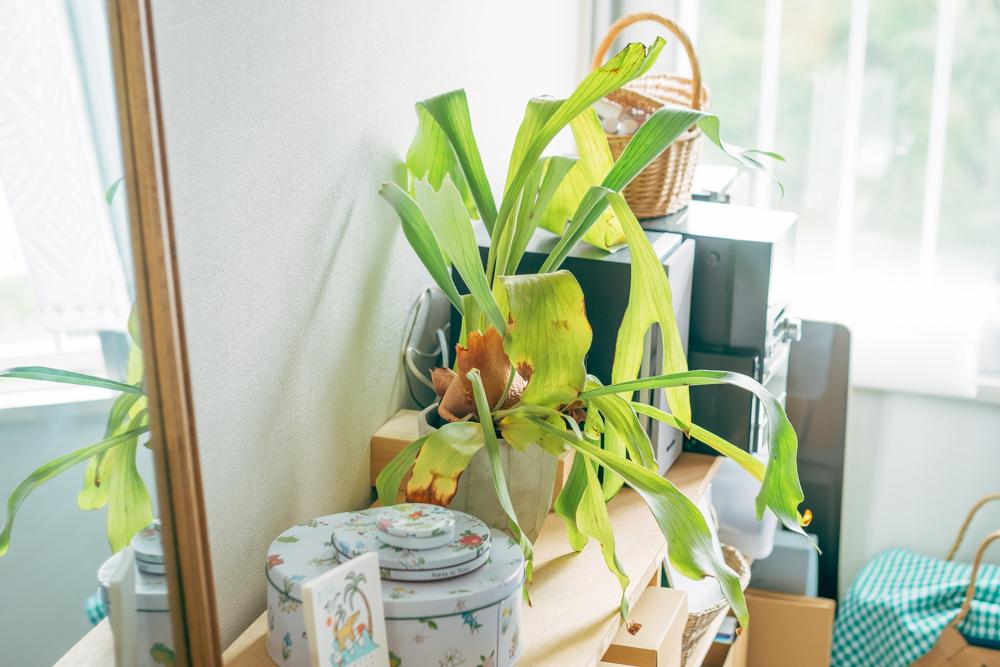 お部屋のあちこちに、植物もうまく馴染むように取り入れられています。