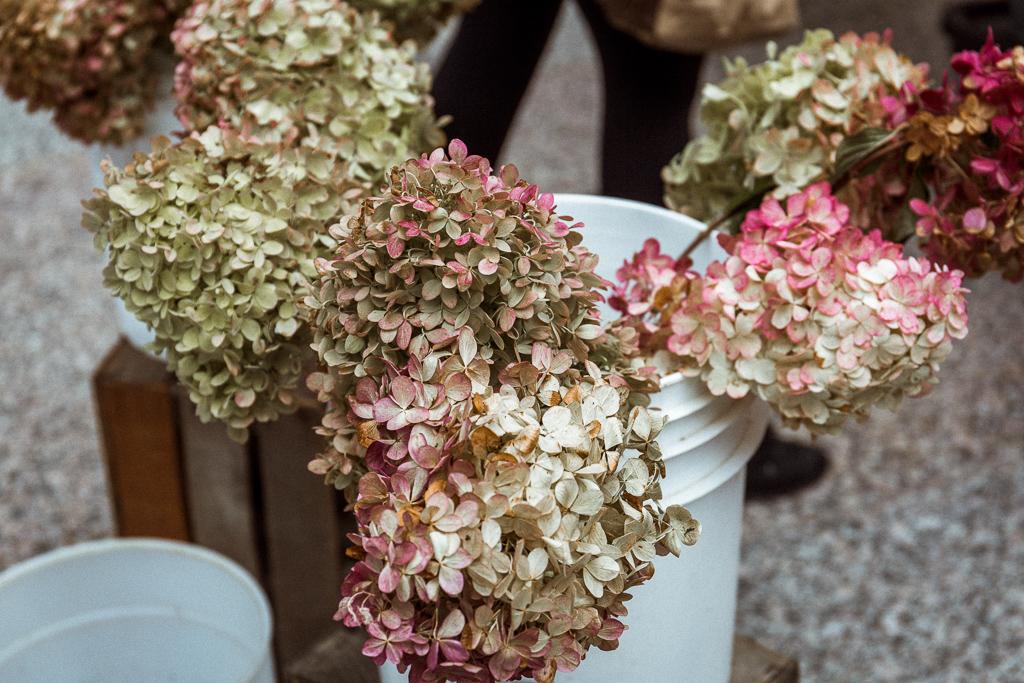 秋になると、いわゆる「くすみ色」が恋しくなってきます。おすすめなのは「ピラミッドアジサイ」などの秋色紫陽花です。梅雨の季節の紫陽花とはまた違った味わいがありますよ。